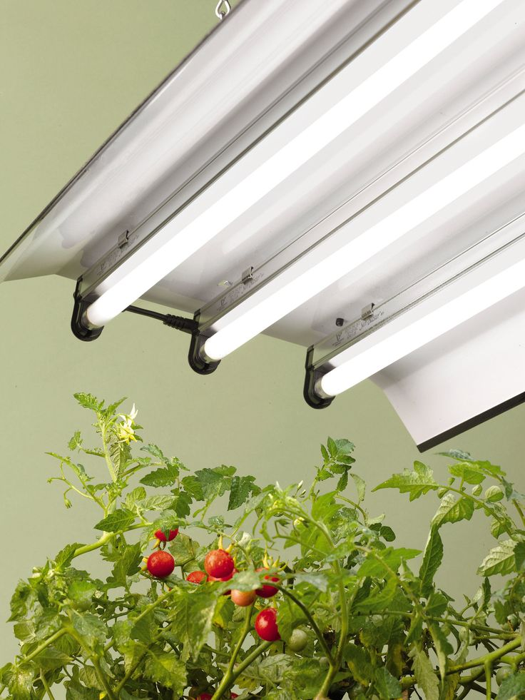 Probably need to buy this. See if there is an easier way to hang this and make sure to find a place to hang it before buying it. T-5 Bulbs High-Intensity Light Fixture | Grow Lights | Gardener's Supply