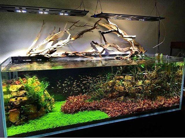 Aquascaping Discus Tank