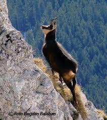 Reservations: Bucegi National Park 35,700 ha in two counties, Prahova and Dambovita; Reservation Ariniş Sinaia, Rea Valley Reservation, Glodeasa old woods, Zagan peak , Bratocea Reservation.