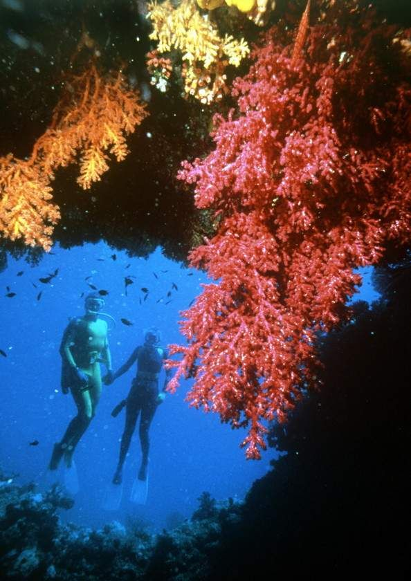 Corallo della Grande barriera corallina, Queensland                                     Wow! I would love to go and do this with my husband.