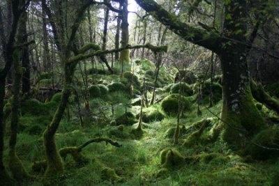 Ariundle Oakwood, near Strontian, Argyll, Scotland.