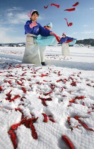 新潟で「かんずり」の雪さらし