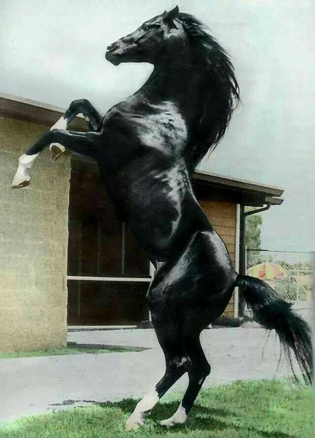 (92) Horses & Freedom - Photos