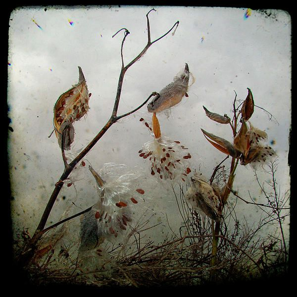 Milkweed Art | New Comments for Sunday, December 18th, 2011