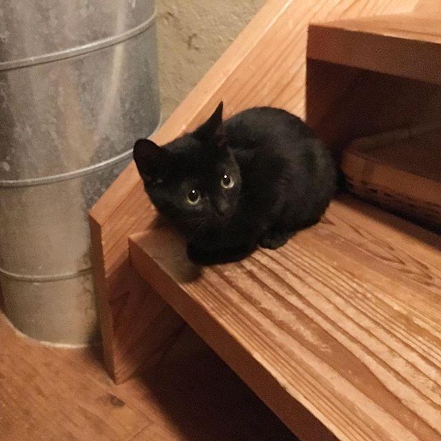 #gigi #kiki #cats #catsofinstagram #catstagram #instagramcats #instacats #catlife #catsofig #catsoftheday #ilovemycats #cutecats #tabbycat #blackcat #babycat #brothers #ねこすたぐらむ #ねこ部 #愛猫 #親ばか #キキ #ジジ