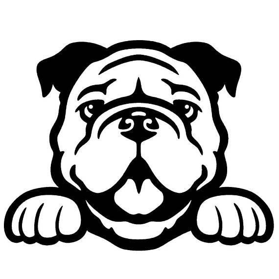 Bulldog Peeking Cute Dog 5 Vinyl Decal Window Sticker Bulldog