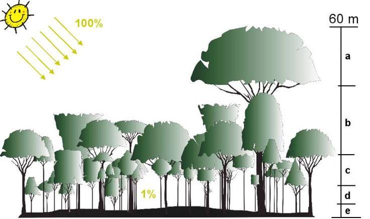 die besten 78 ideen zu tropischer regenwald auf pinterest. Black Bedroom Furniture Sets. Home Design Ideas