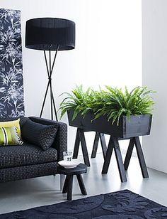 Planta interior poca luz helecho serrucho interior - Luces para plantas de interior ...