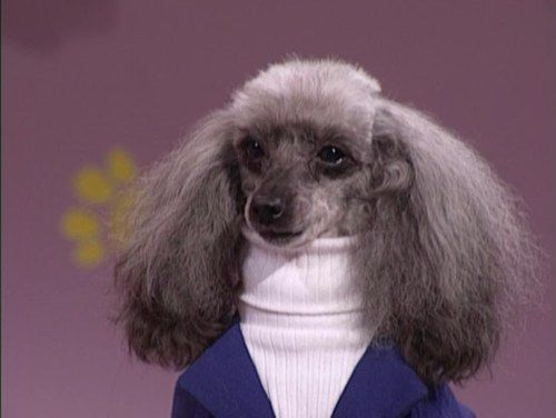 Animals Wearing Turtleneck Sweaters | Let's