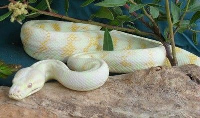 RTRM reptile supplies| Online Store| Discount Snake Supplies |High Value