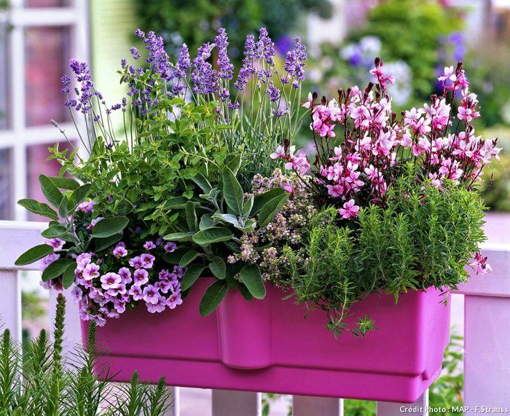 Les 25 meilleures id es concernant gaura sur pinterest fleur gaura stipa et petit jardin l - Pourpier vivace en jardiniere ...