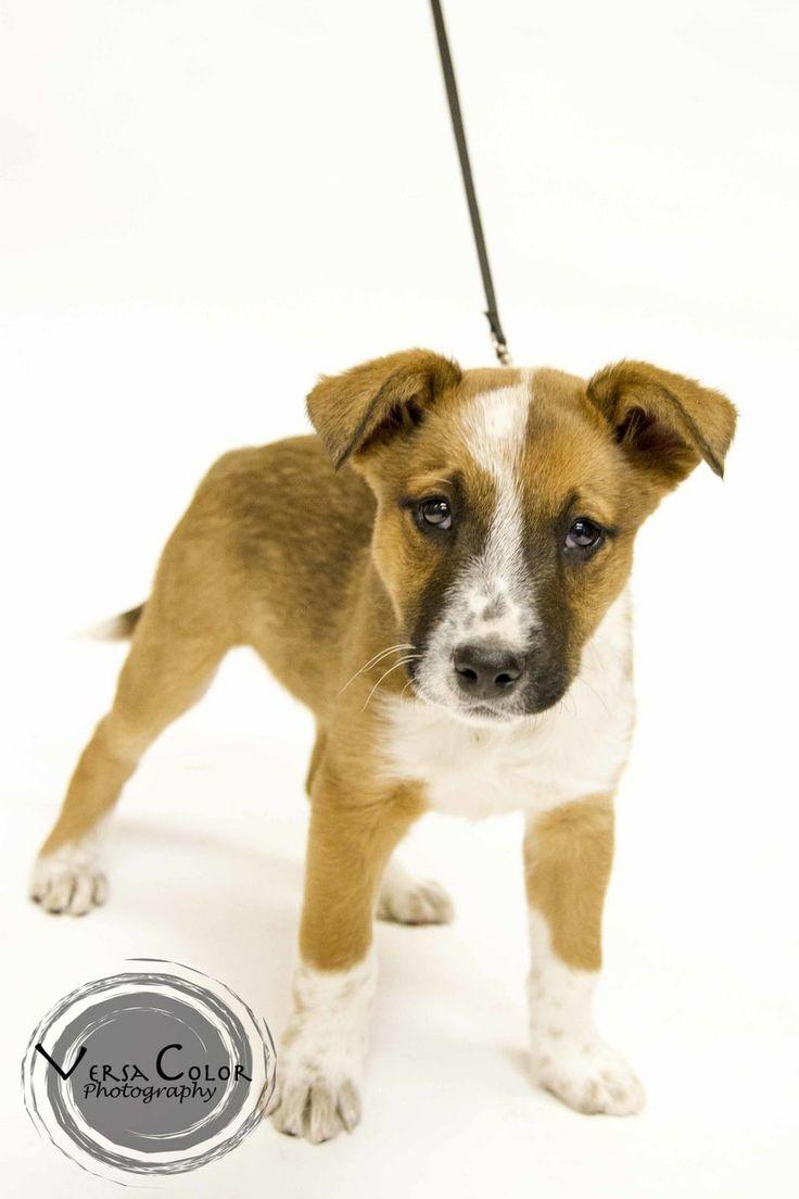 Adopt Zuko on Foster dog, mix,