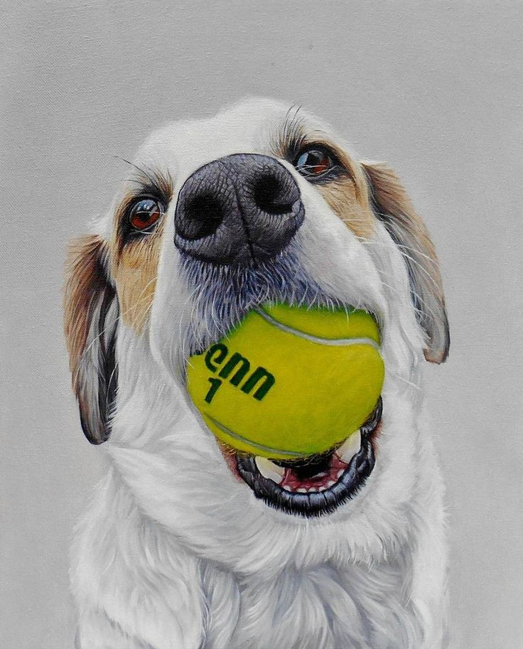 Realistic Funny Dog Portraits – Fubiz Media