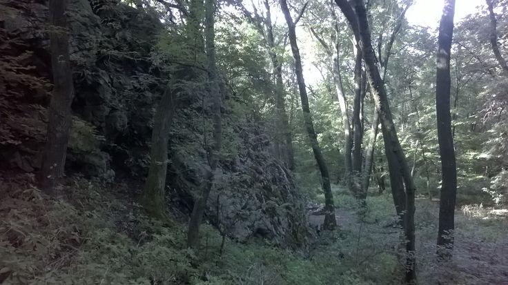 White rocks on the Devínska Kobyla hill./Biele skaly na Devínskej Kobyle.