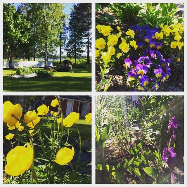 Värikoodattu kukkapenkki. Alkukesän värit ovat keltainen ja violetti.