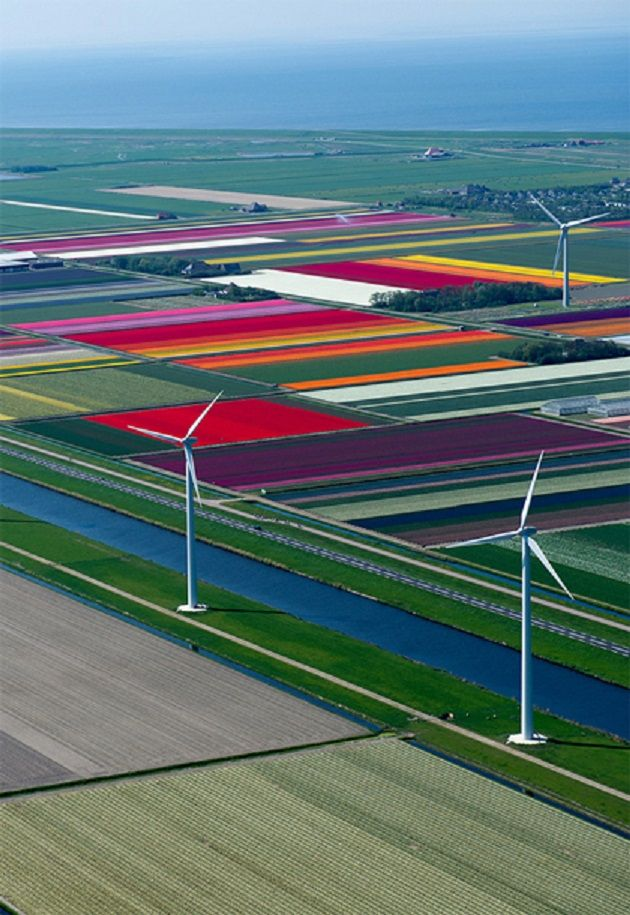 The #Netherlands fields of tulips                                                                                                                                                                                 More