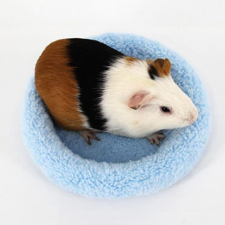 Pet Bed Holland Mouse Mat Cushion Cotton Velvet Small Mattress Chinchilla Warm Thick Pad Hamster Hedgehog Mini Pad Small Bed H 020 Pet Supplies Melbourne Pet Supplies Online From Tyaya, $3.83| Dhgate.Com