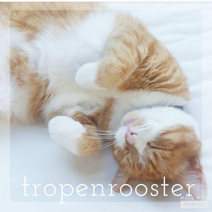 Ik neem er een voorbeeld aan...Stip heeft, net als Tijn de huiskat, vandaag een tropenrooster ingesteld! ☆ Geniet van de heerlijke dag!