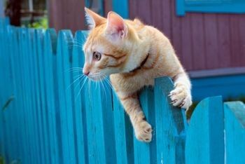 1000 Images About Cat Repellent On Pinterest Gardens