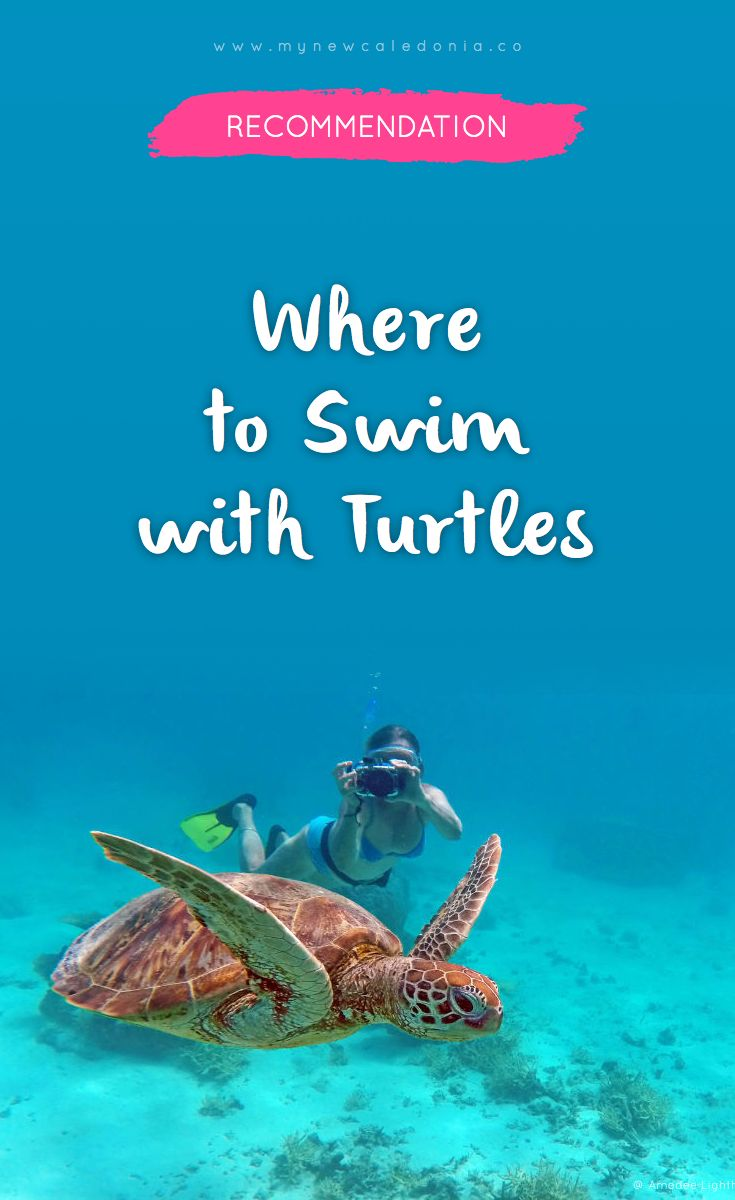 4 very accessible places to swim with turtles in New Caledonia.   https://mynewcaledonia.co/travel-tips/where-to-swim-with-turtles-in-new-caledonia