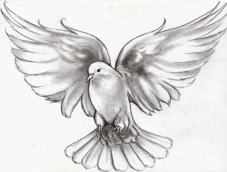 flying dove pencil drawing - photo #15