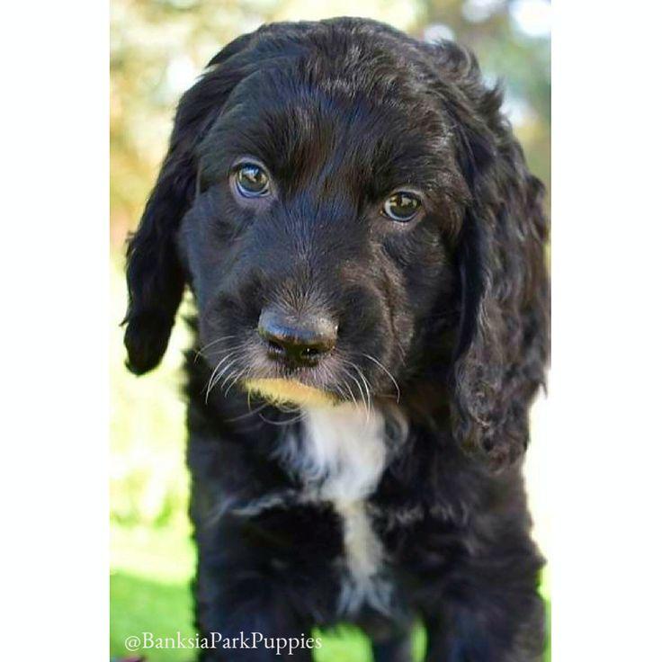 Puppy-dog eyes! 😍🐶