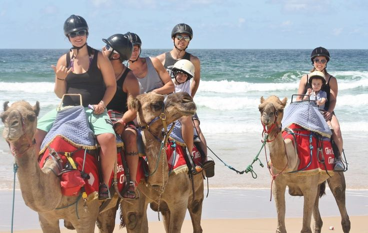 Things to do, Attractions - Coffs Coast Camels, Tourist Attractions, Coffs Harbour, NSW, 2450 - TrueLocal