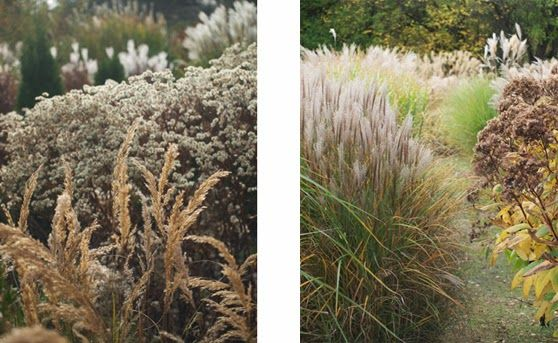 Grasses in gardens - Overdam
