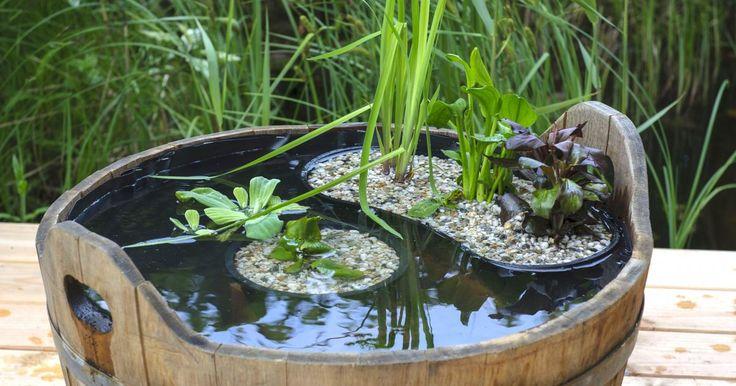 Wasser belebt und macht einen Garten eigentlich erst vollständig – doch nicht jeder hat genügend Platz, um einen richtigen Gartenteich anzulegen. Unsere Idee lässt sich leicht nachmachen, braucht kaum Fläche und verwandelt den kleinen Holzbottich in einen hübschen Miniteich.