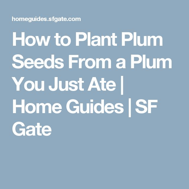 How to Plant Plum Seeds From a Plum You Just Ate | Home Guides | SF Gate