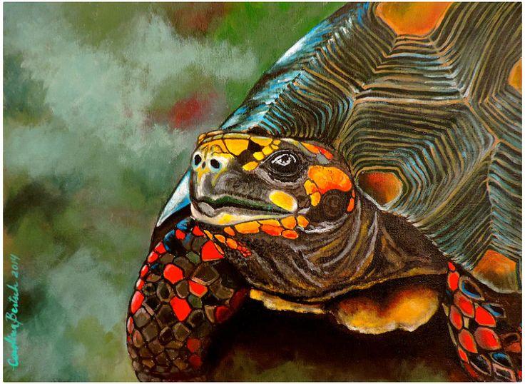 Tortuga de patas rojas -  Carolina Bertsch