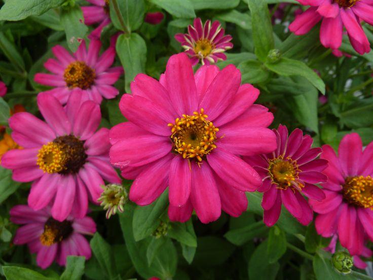 Flowers from the Children's Garden in Winnipeg.