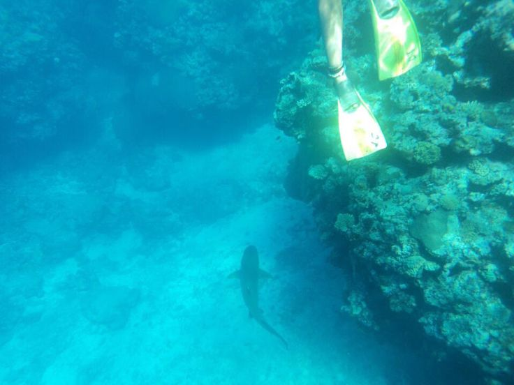 Reef Shark Snorkelling from Waya Lailia Island, Yasawa Islands, Fiji