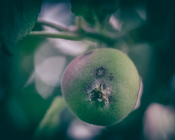 Day 41 - Apple