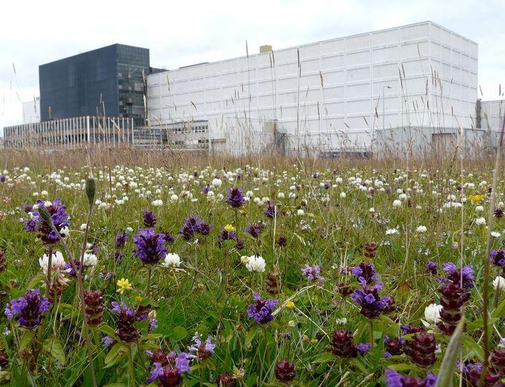 Dounreay Site Restoration Ltd - Bees