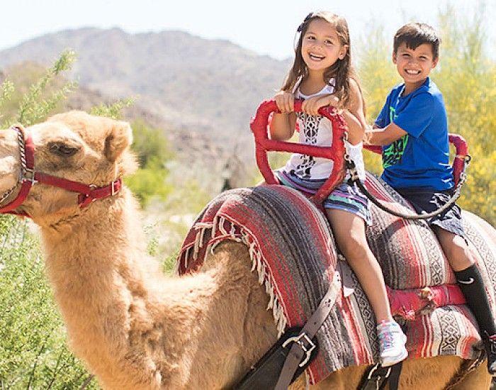 926b9b4834c8b44e0b70e6b211660dc3 - The Living Desert Zoo And Gardens Tickets