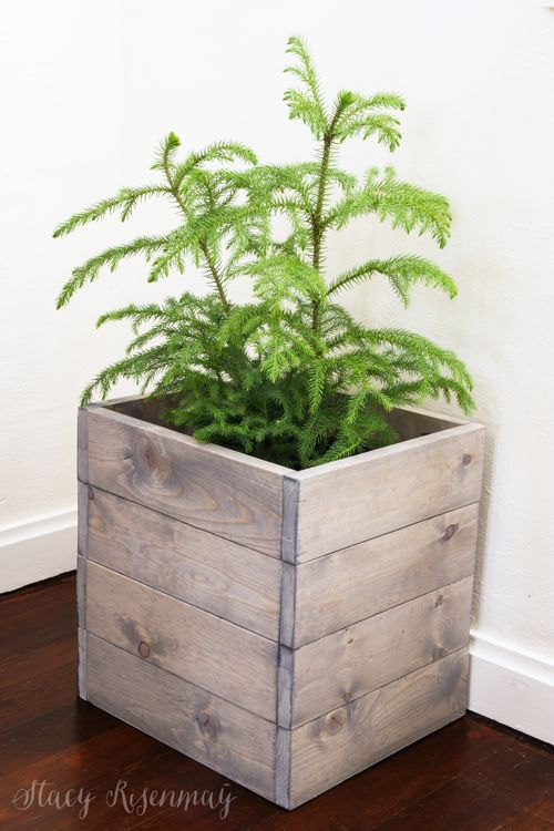 15 easy to care for plants! Norfolk-Island-Pine