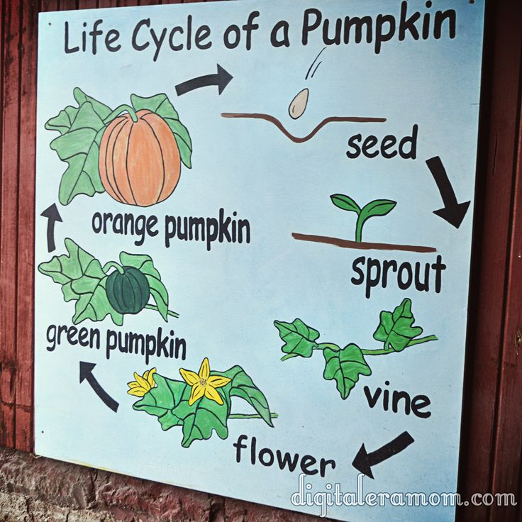 Really great educational stuff at the KC Pumpkin Patch.