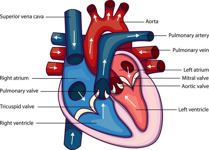 What year was the first successful human heart transplant ...