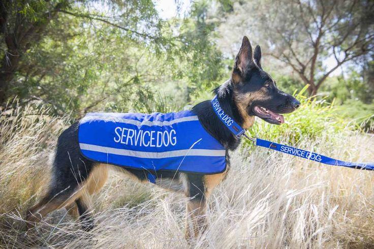 Blue SERVICE DOG reflective waterproof dog coat, collar and matching lead   Model: German Shepherd