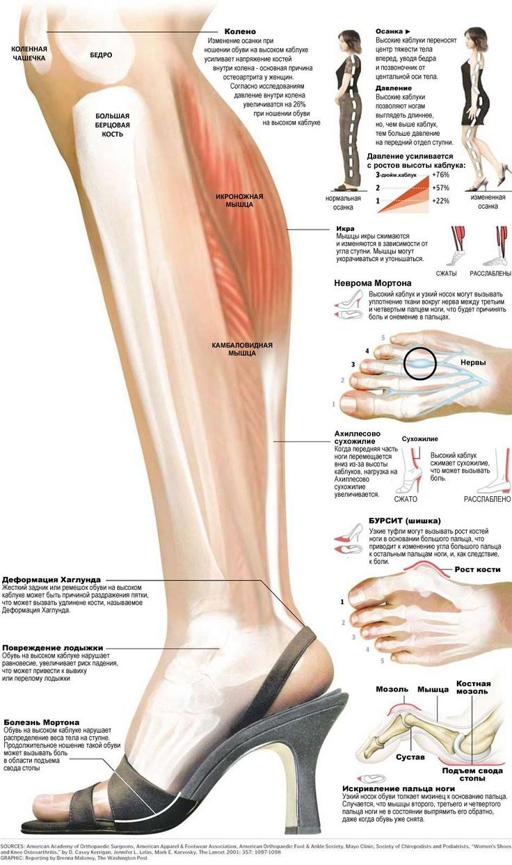 Высокие каблуки изменяют мышцы ног — Econet - включи сознание