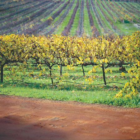 Australian wine is amazing!
