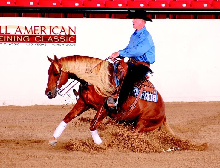 My favorite reining horse - Cattitude.