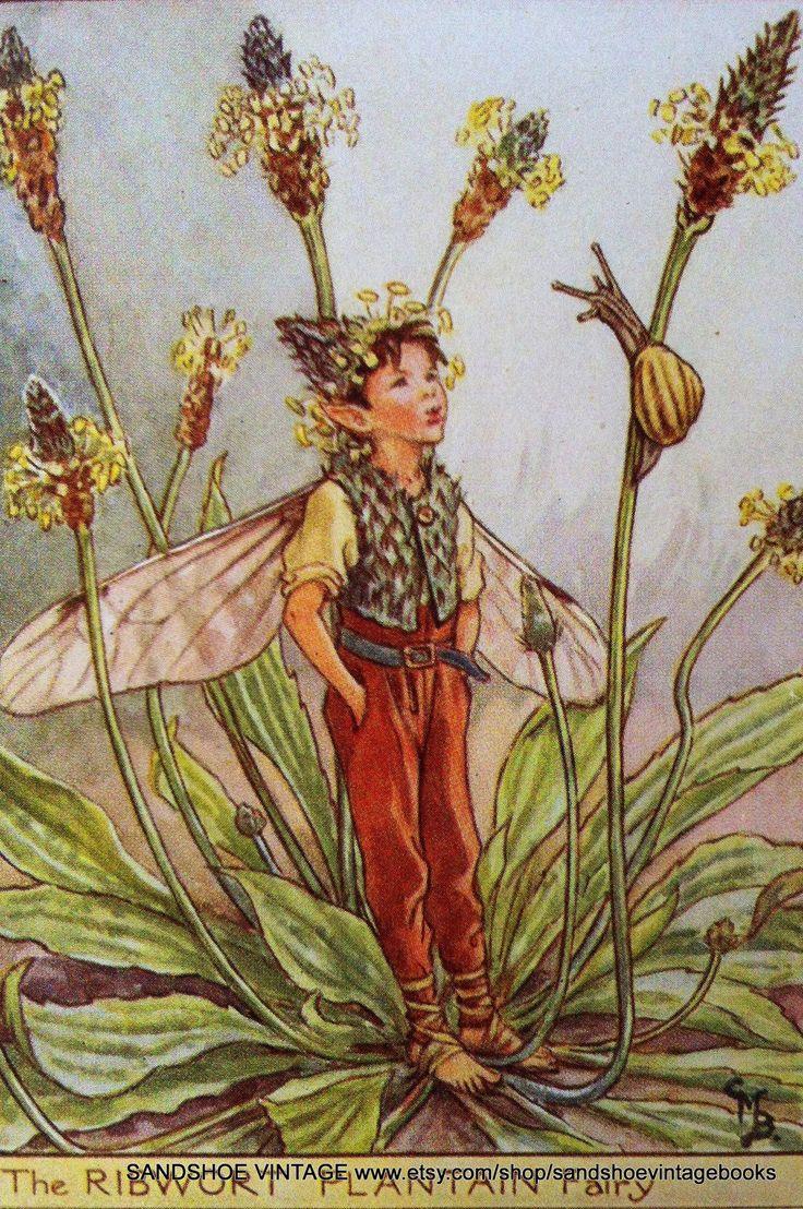 """""""The Ribwort Plaintain Fairy"""" by Cicely Mary Barker."""