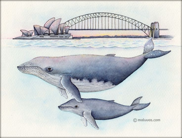 Inspired by Finding Nemo - 52 Week Illustration Challenge - 03 Australiana. Inktense pencils on watercolor paper.  #illo52weeks