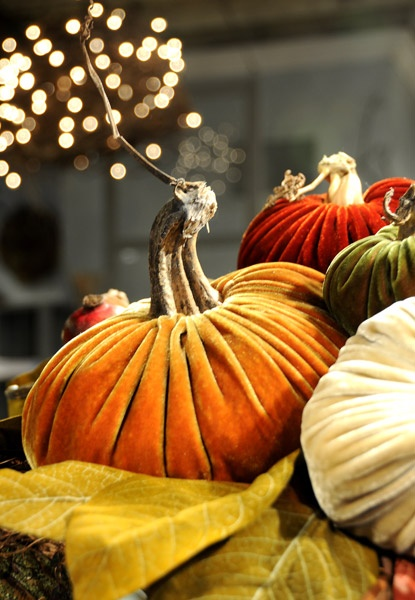Love these velvet pumpkins with real stems! They are beautiful!!: