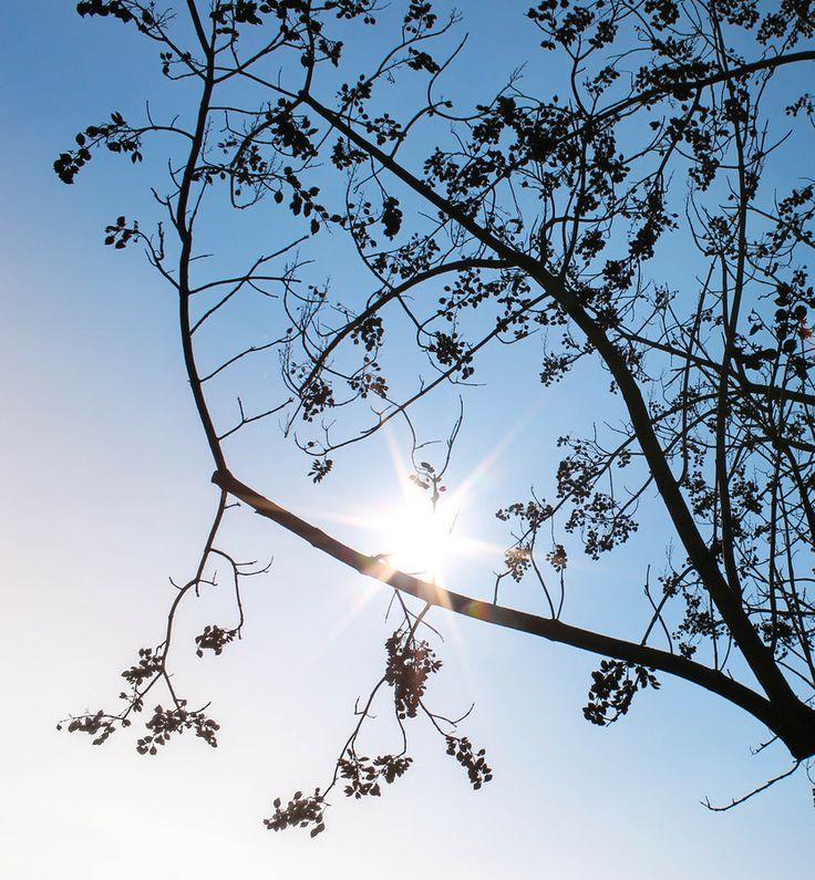 Sun Love by Barbara  on 500px