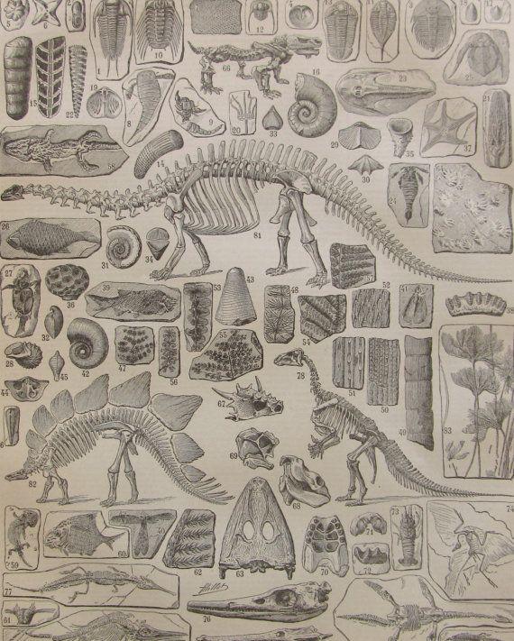Dinosaure illustration en noir et blanc extraite du par someoldnews, $8,60