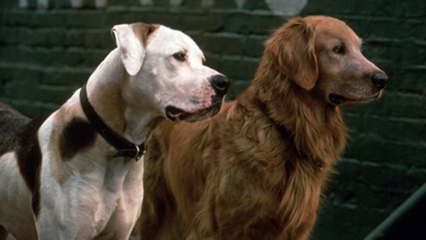 7 Famous Dogs From The '90s That Are Definitely Dead Now - From loyal companions to downright heroes, these magnificent mutts warmed our hearts as kids, but, statistically speaking, they're all definitely dead now. @clickhole