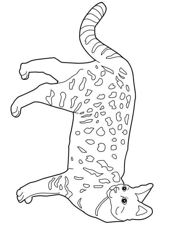 Cat Color Pages Printable Cats Coloring Pages Savannah